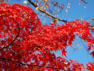 Momiji: A japán vidék csodái – őszi nagykörút (2019. október 31. – november 13.) ***